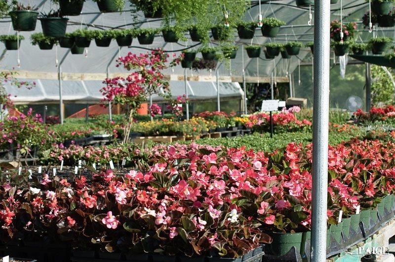Spring Creek Nursery in Collinsville TX 76233