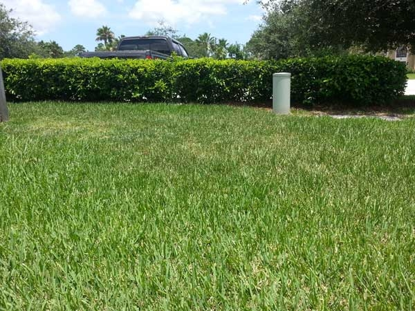 Just mowing lawn service san antonio texas tx for Local lawn mowing services