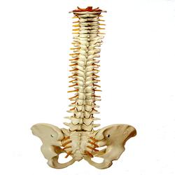 Pro Adjuster Chiropractic - Missoula, MT - Chiropractors