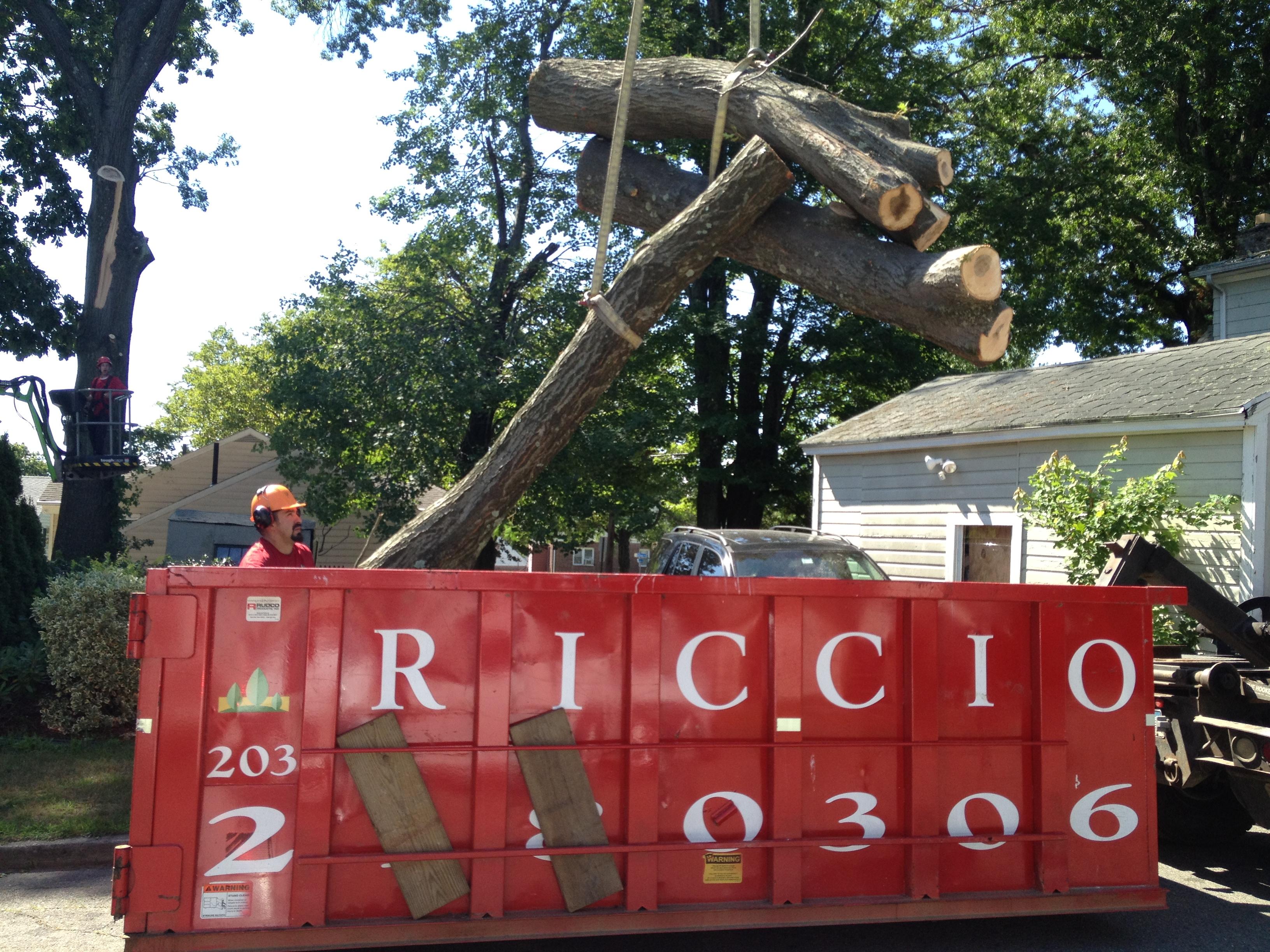 Riccio Landscaping & Tree Service image 4