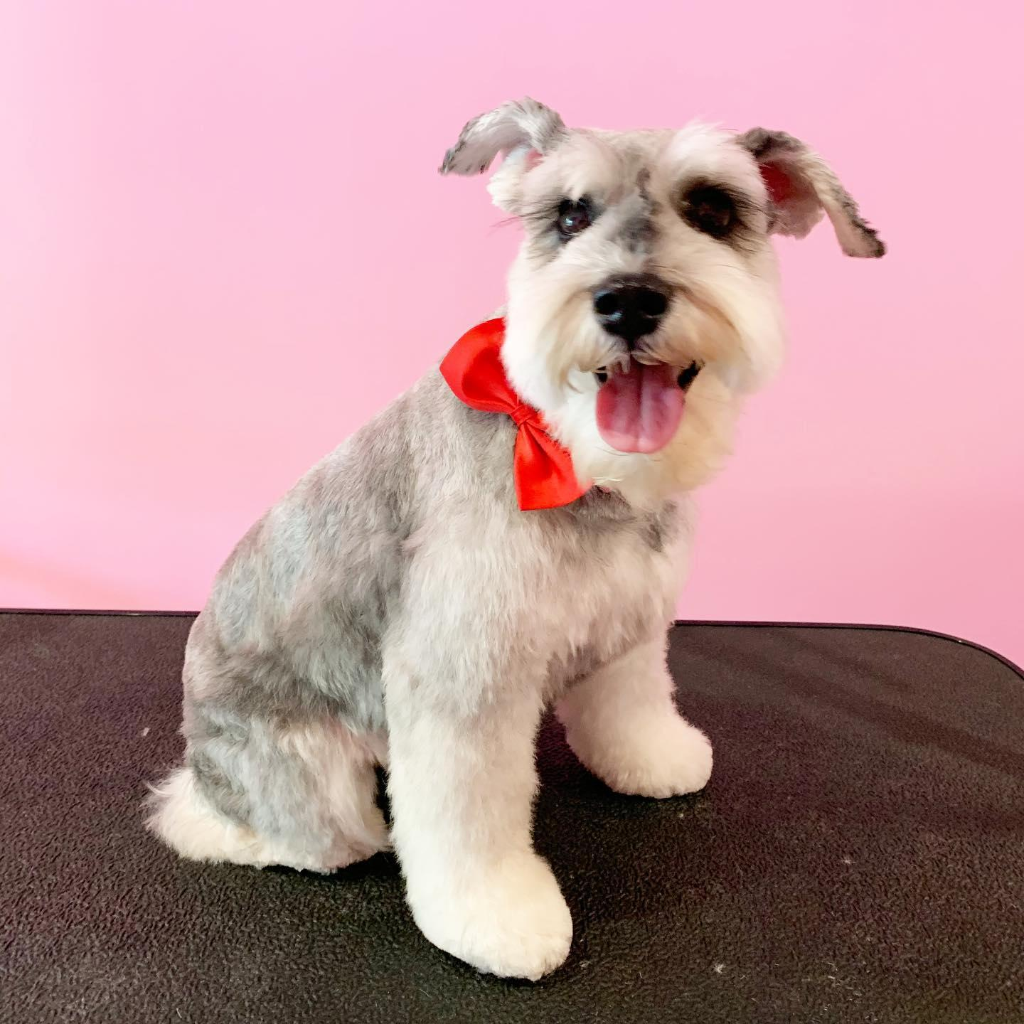 Do you need someone to deliver pet products at your doorsteps? Woof Gang Bakery & Grooming Aventura is a local store-to-door delivery service in Florida to fulfil all of your companion animal's needs.