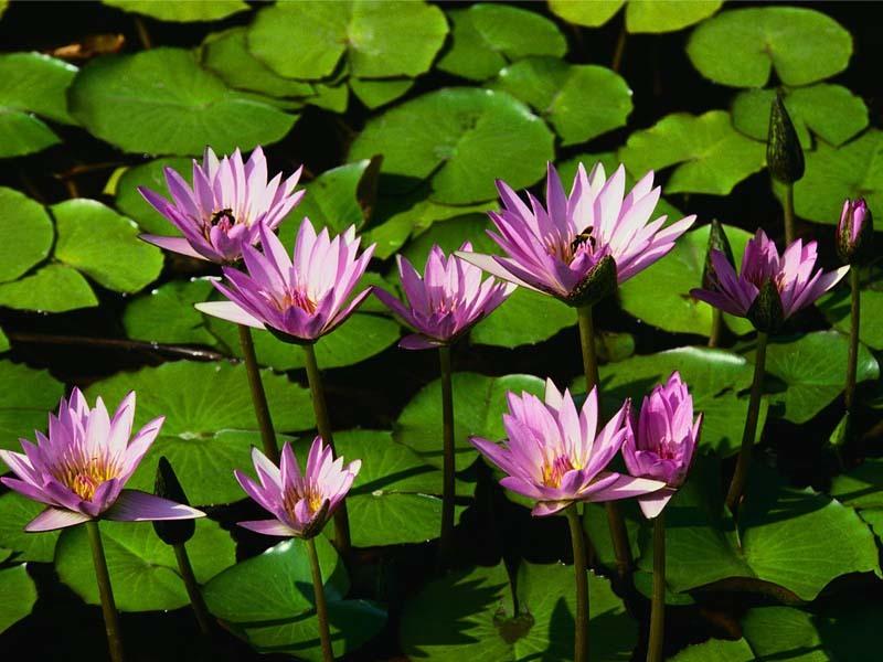 Bloemen Parket