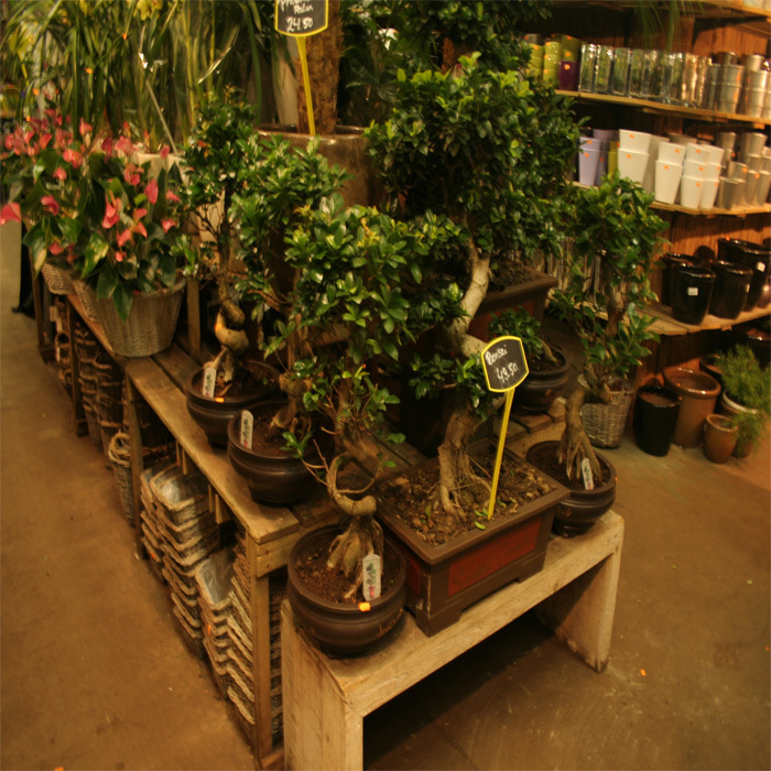 Tol Plantenmarkt F A van