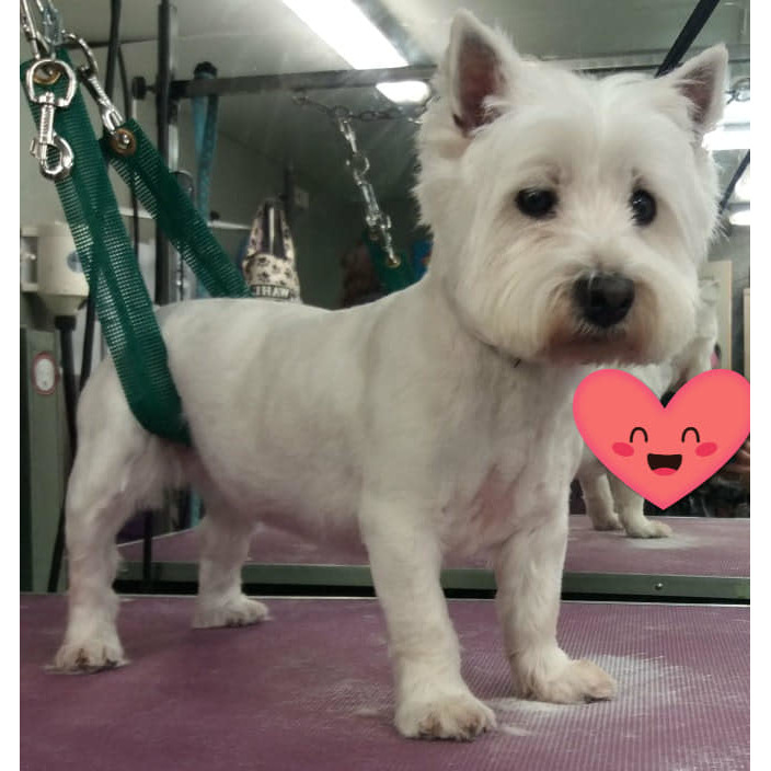 Lacey's Dog Grooming Service - Stoke-On-Trent, Staffordshire ST8 6AY - 07522 656779 | ShowMeLocal.com