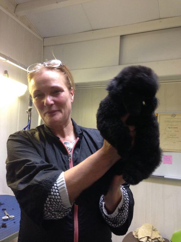 Regina Honden - Katten Trimsalon