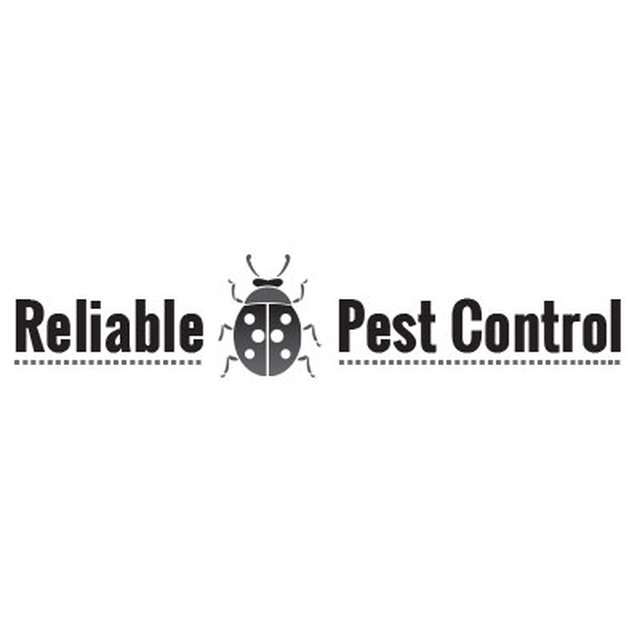 Reliable Pest Control - London, London N13 6AB - 07850 579486 | ShowMeLocal.com