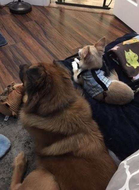 April's-Pet-Care-Pet-Sitting-Scottsdale-AZ