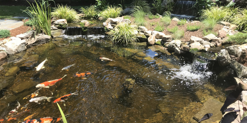 Enjoy the calming nature of a koi pond in your own yard.