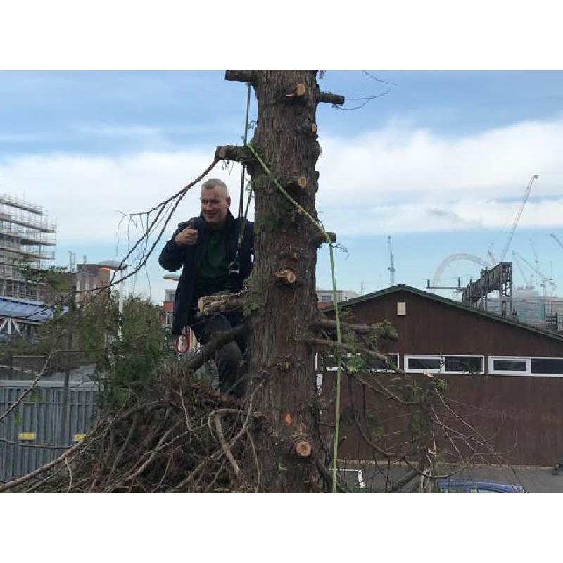 Tree Surgeon Harrow - Harrow, London HA2 9JX - 07583 585720 | ShowMeLocal.com