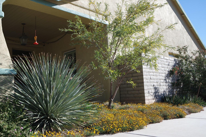 Ecosense Sustainable Landscapes Tucson Az Ecosenseaz