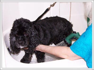 Perfect paws pet salon coupons near me in plymouth 8coupons for A perfect pet salon