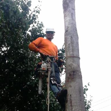 J Lozano Professional Tree Service
