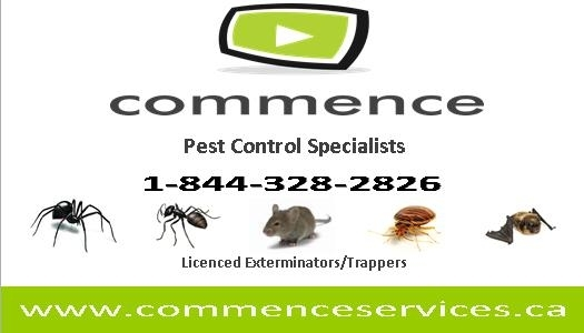 Images Commence Pest Control Specialists