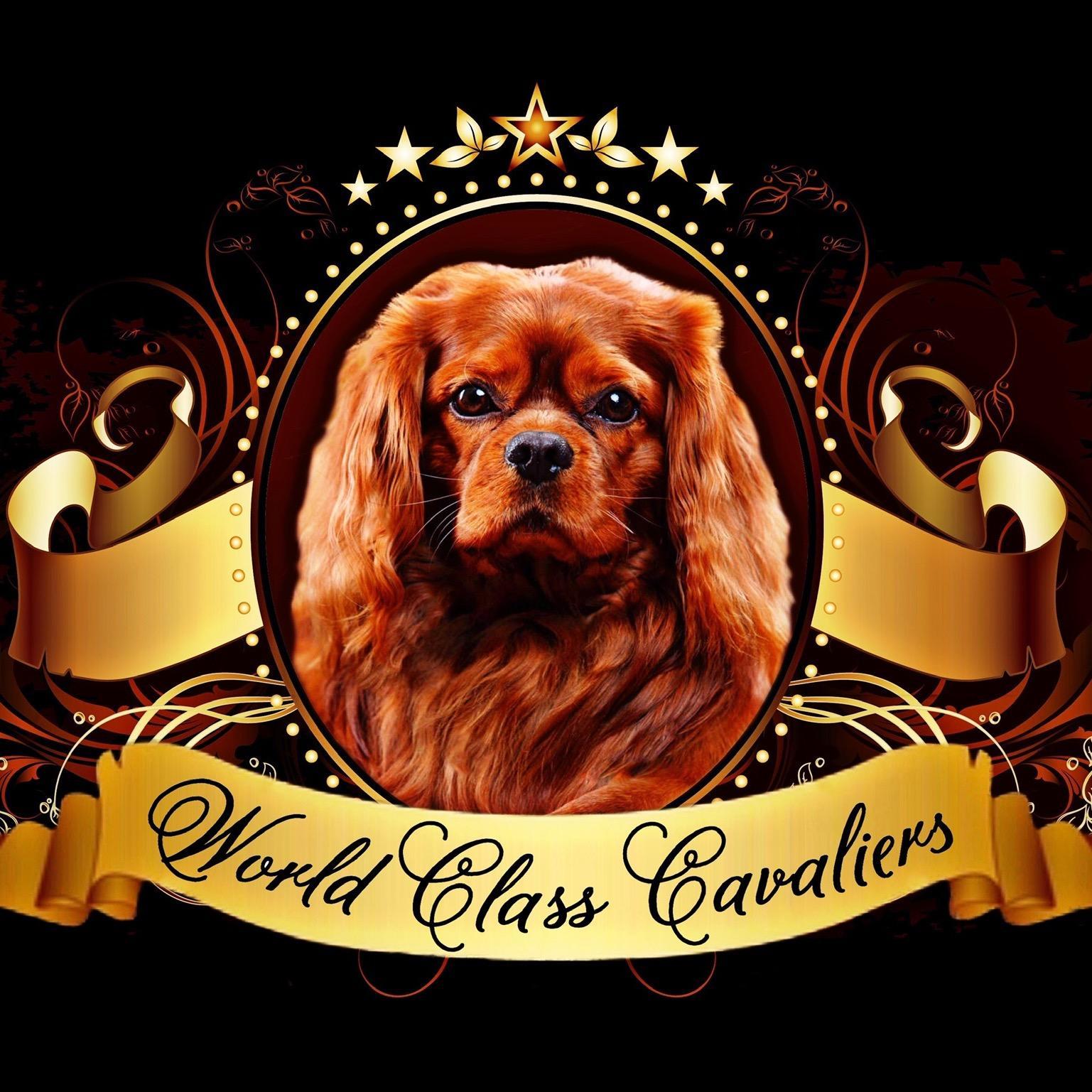World Class Cavaliers LLC - Miami, FL 33142 - (786)589-1338 | ShowMeLocal.com