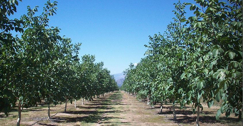 Agrogenética Riojana