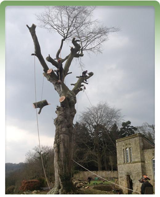 Tibbs Tree Surgeons - Radstock, Somerset BA3 4HE - 01761 239324 | ShowMeLocal.com