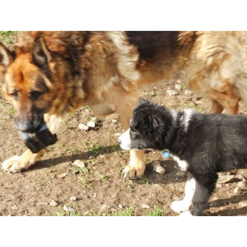 Rock House Boarding Kennels - Bristol, Gloucestershire BS36 2NW - 01454 776148 | ShowMeLocal.com