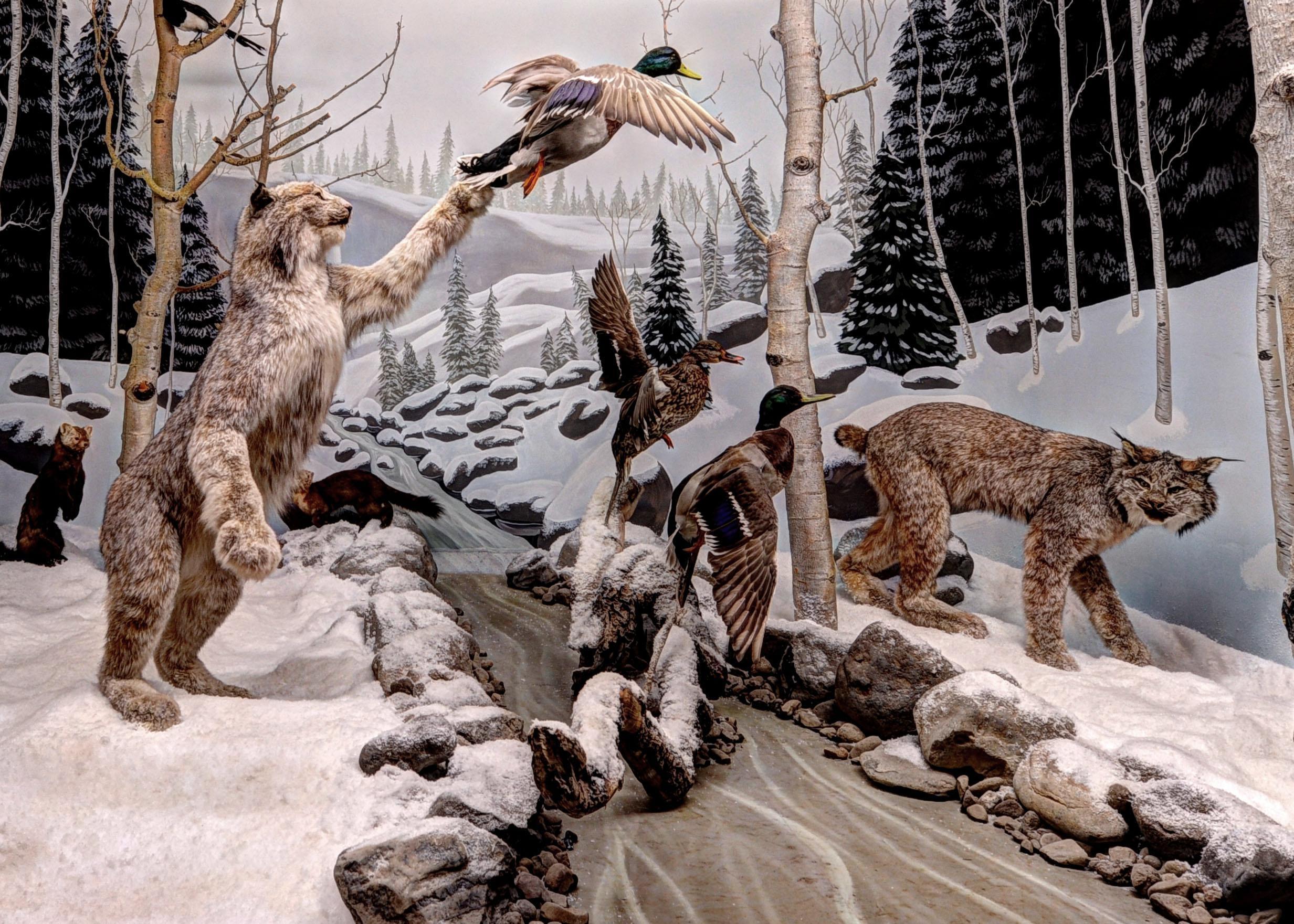 Bryce Wildlife Adventure - ad image
