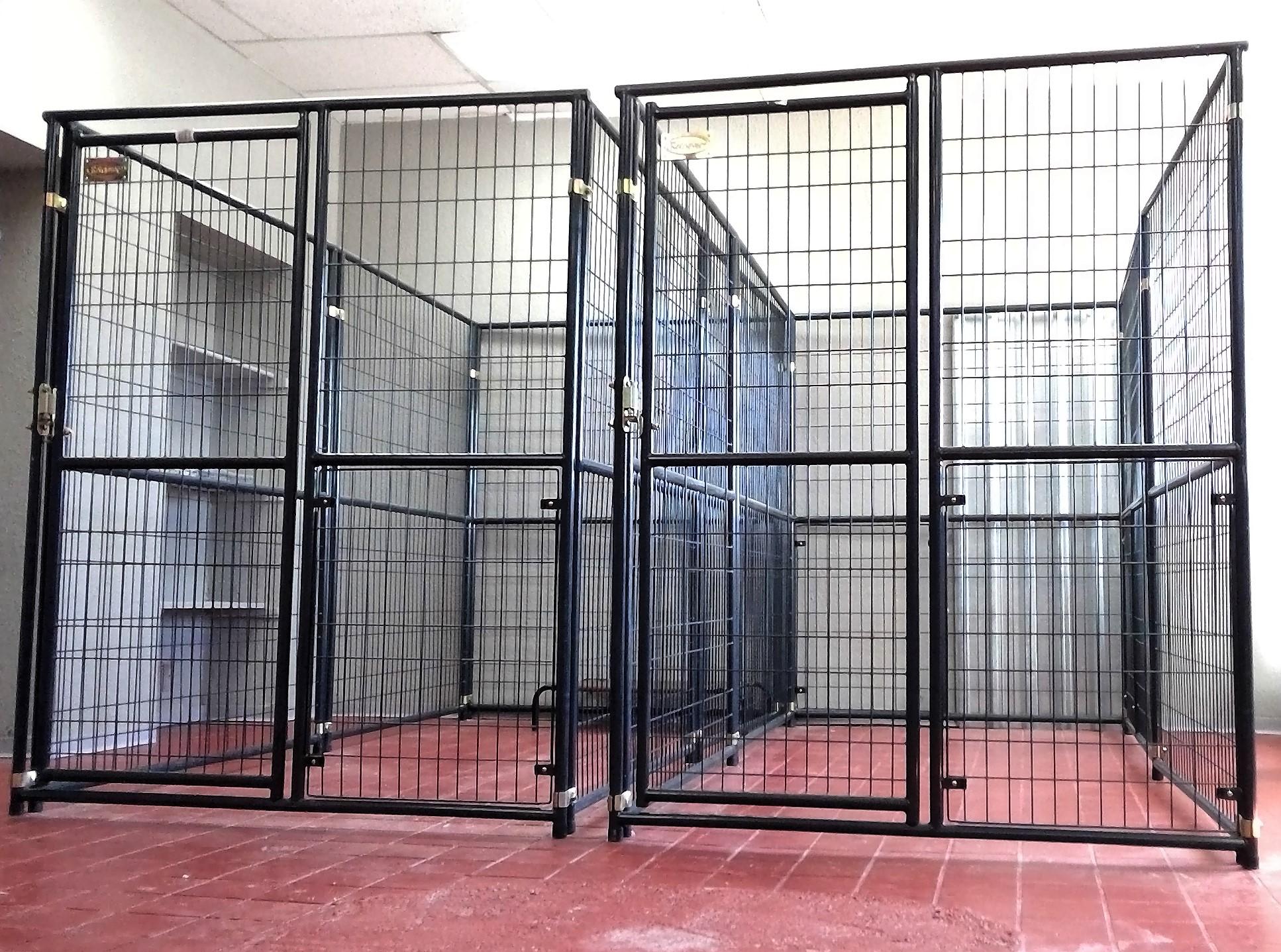 Petsmart Dog Training El Paso Texas