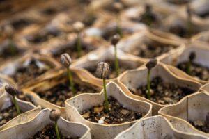 Globalplant Garden Kft.