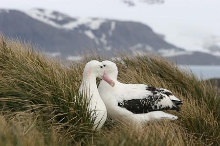 Beluga Expeditions & Adventures BV