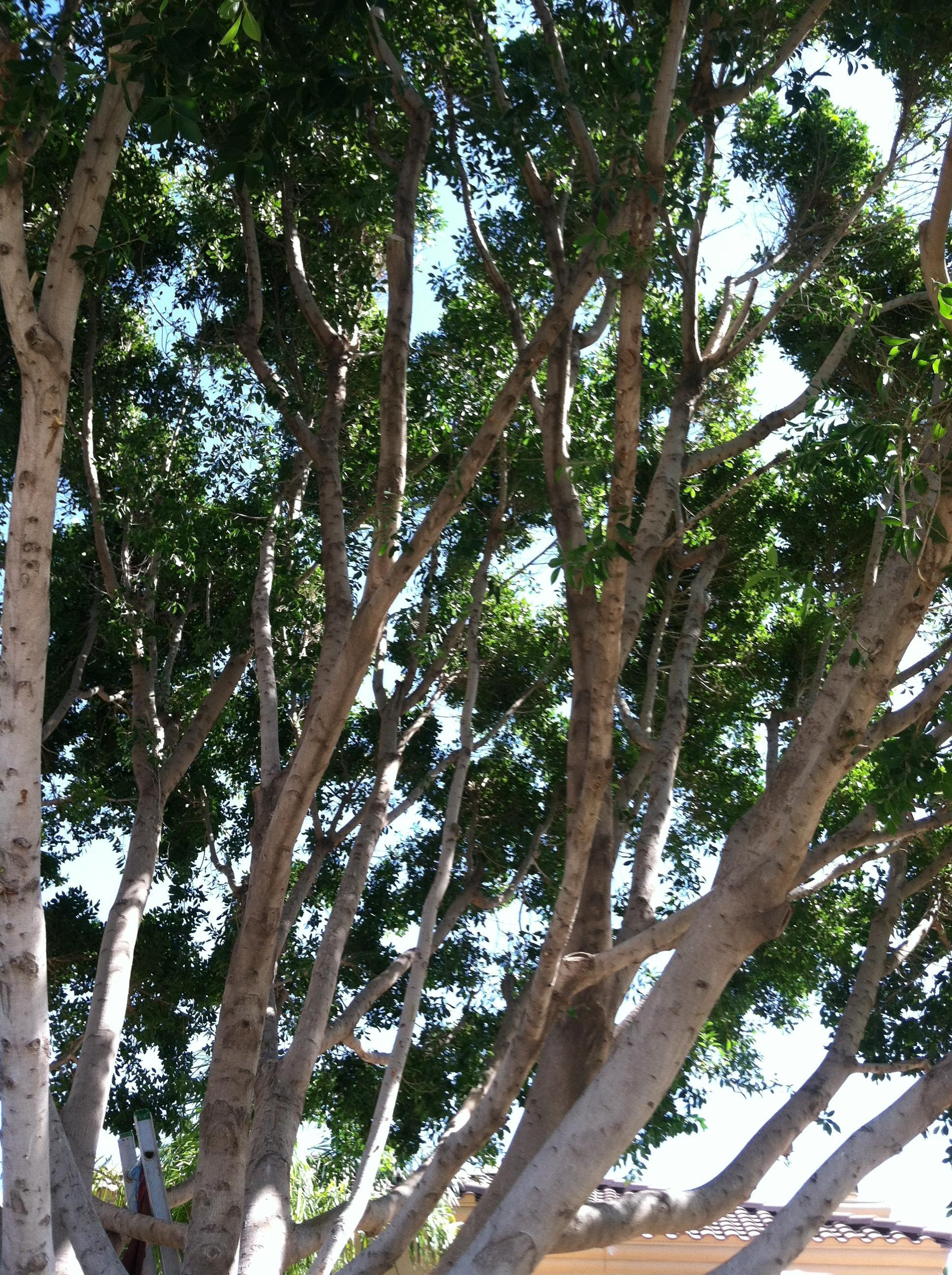 King's Tree Service. Inc