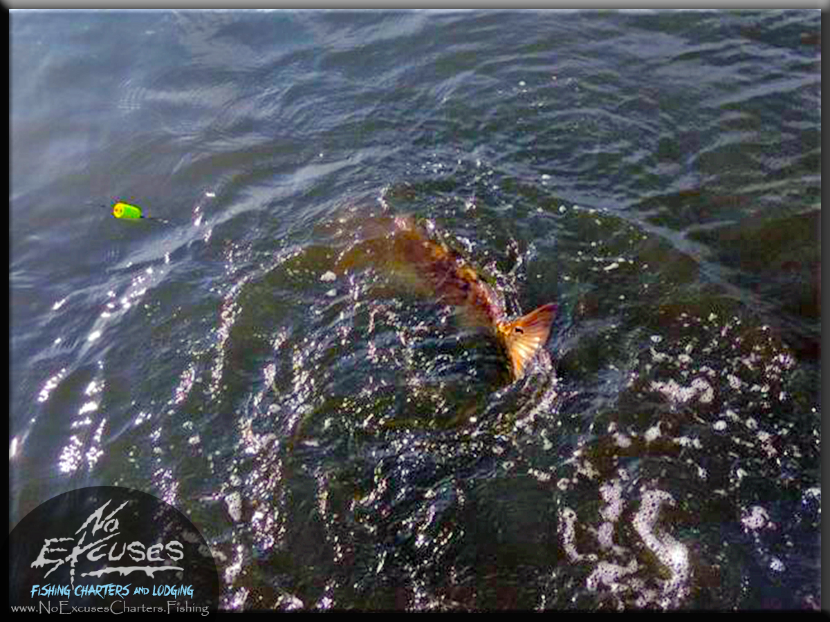 Fishing charters lodging in new orleans louisiana la for Fishing new orleans