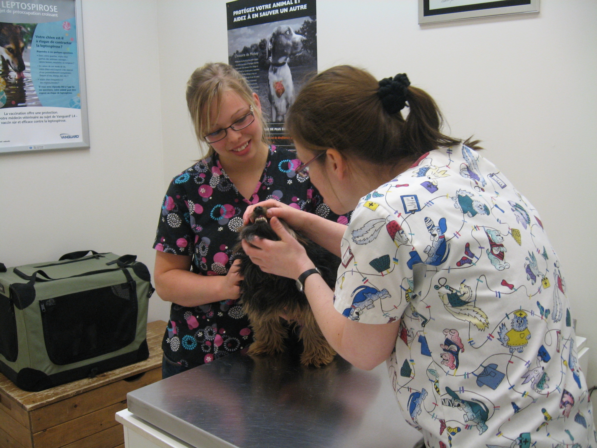 Clinique Vétérinaire de Lyon à Longueuil