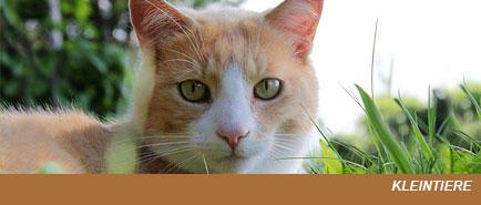 Gross- und Kleintierpraxis Geiser Biglen