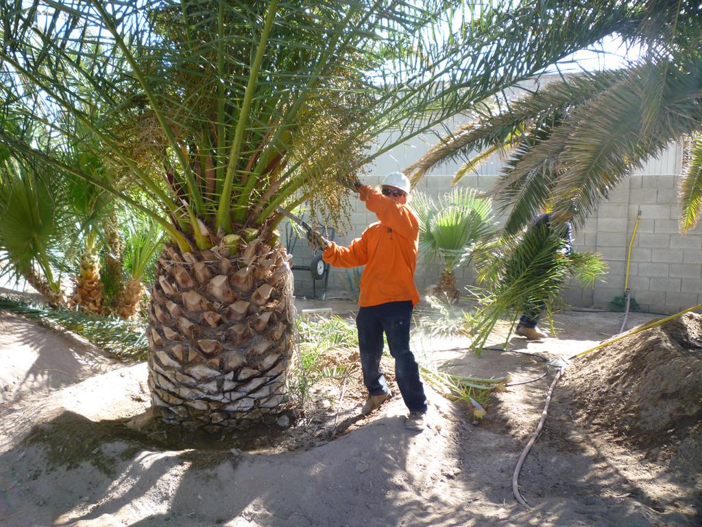 Corpus christi tree care in corpus christi tx 78413 for Landscaping rocks corpus christi