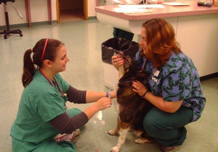 VCA Naper Ridge Animal Hospital Naperville (630)948-7824