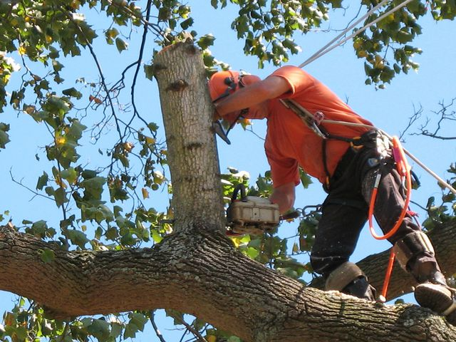 Action Yard and Tree Service