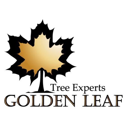 image of Golden Leaf Tree Experts