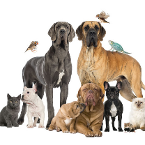 Shively Animal Clinic & Hospital