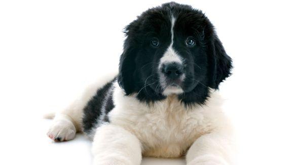 Koiramäen Lemmikkieläinhoitola
