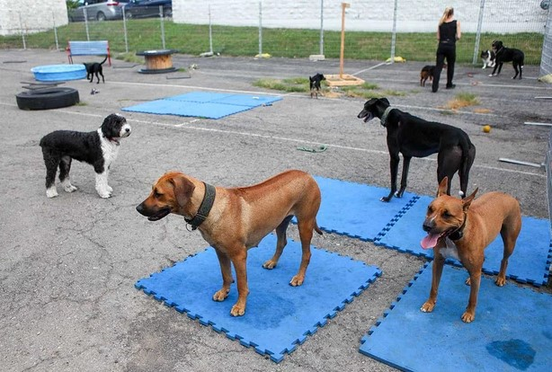 Dog Care Services Blue Collar doggie daycare, LLC Syracuse (315)907-3454