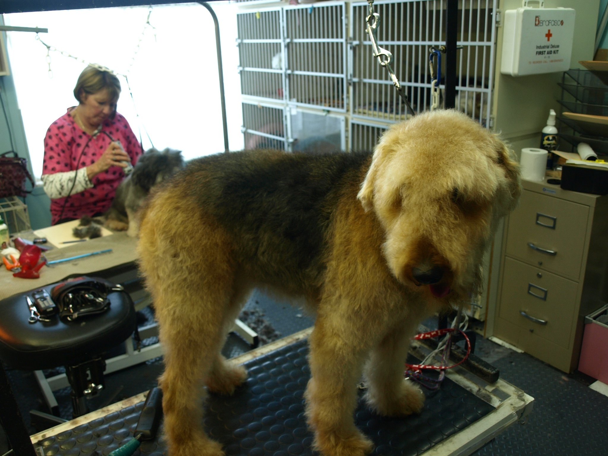 Images Soft Touch Dog Grooming