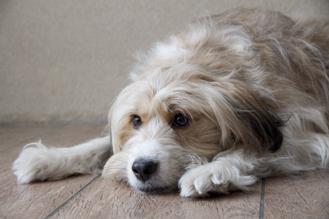 Hondenuitlaatservice Mandy's Animal Care