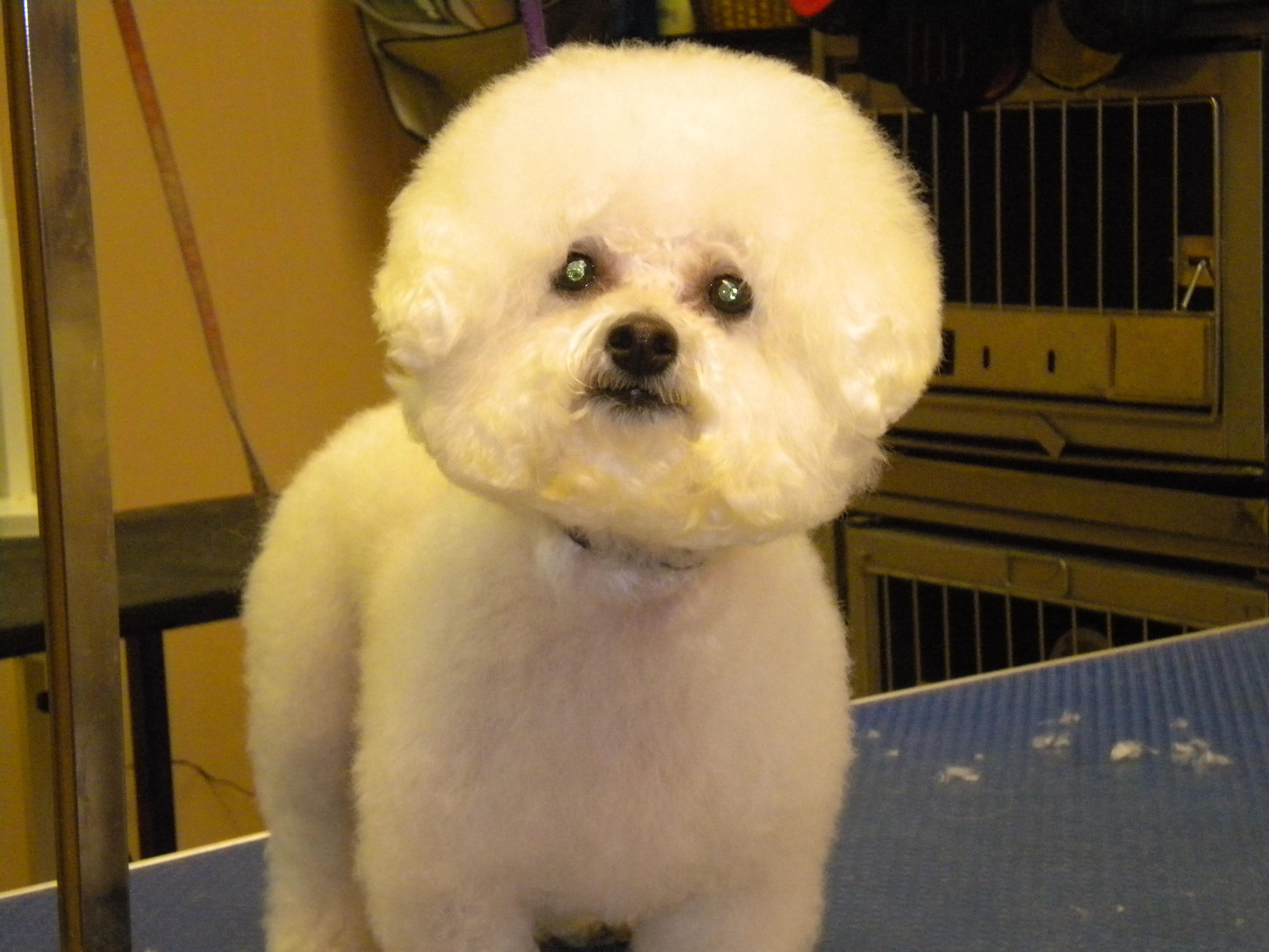 Dog Grooming In Trenton Mi