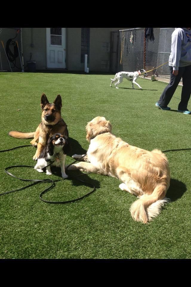 Dog Kennels Near Chapel Hill