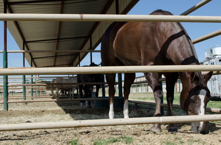 Hidden Springs Equestrian Center