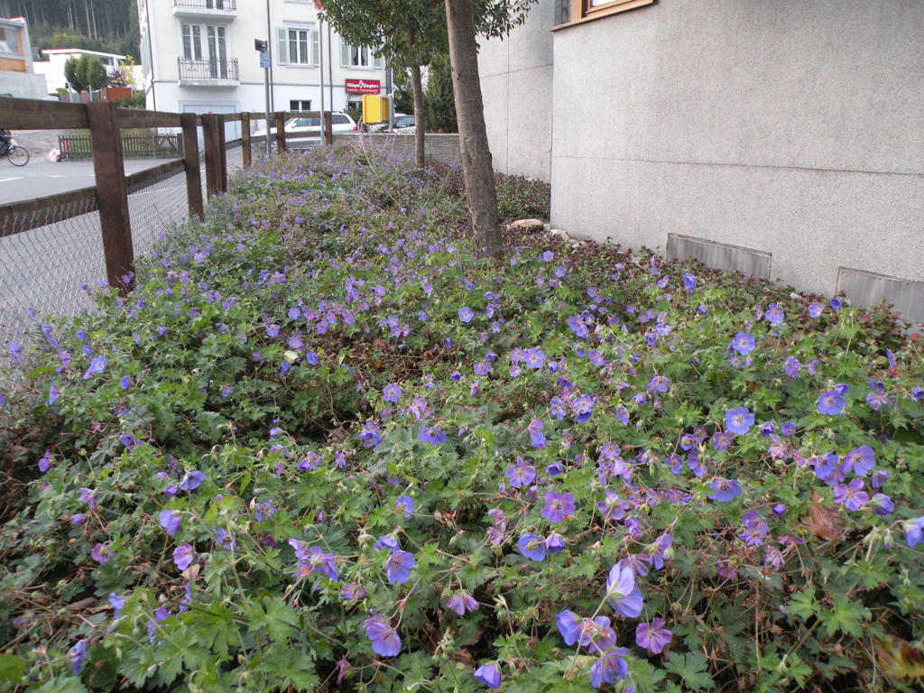 Roth Gartenbau & Gartenpflege