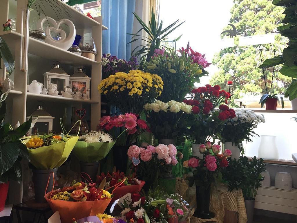 Pinto Fleurs