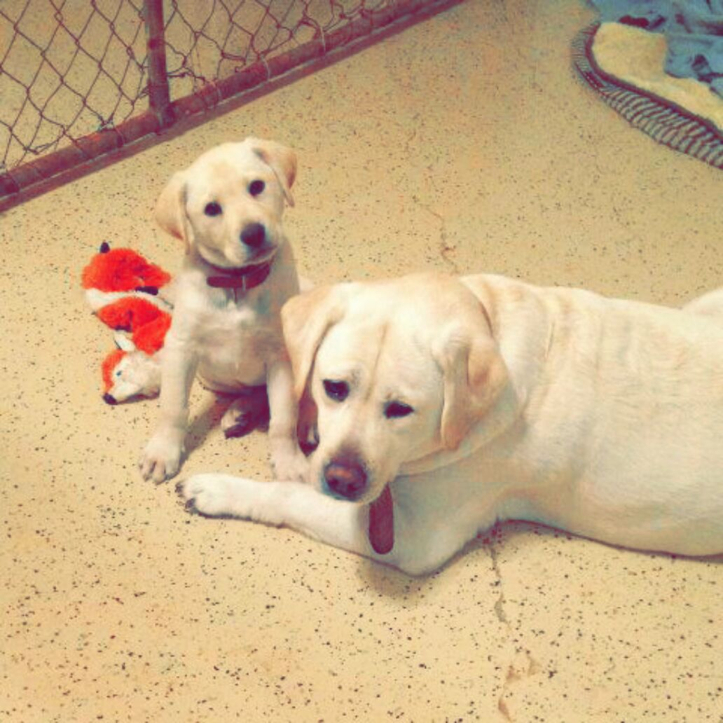Cowtown Canines Dog Daycare And Boarding Coupons Near Me