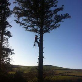 Scanlon Tree Services 2