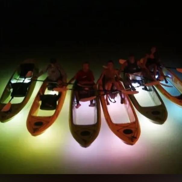 Sharkeys Glass Bottom Tours - Madeira Beach, FL 33708 - (813)527-5822 | ShowMeLocal.com