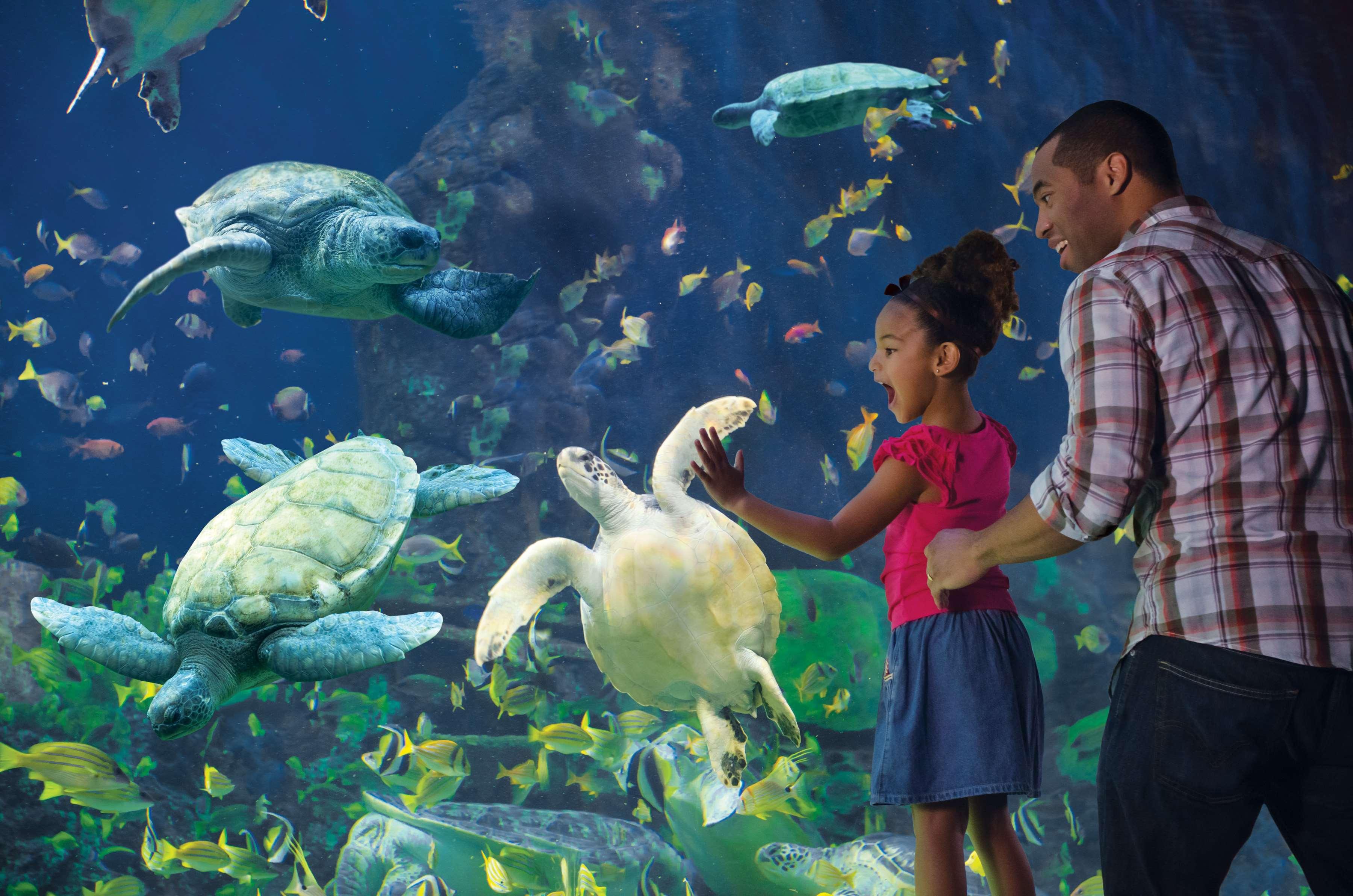 SeaWorld® - Turtle Reef