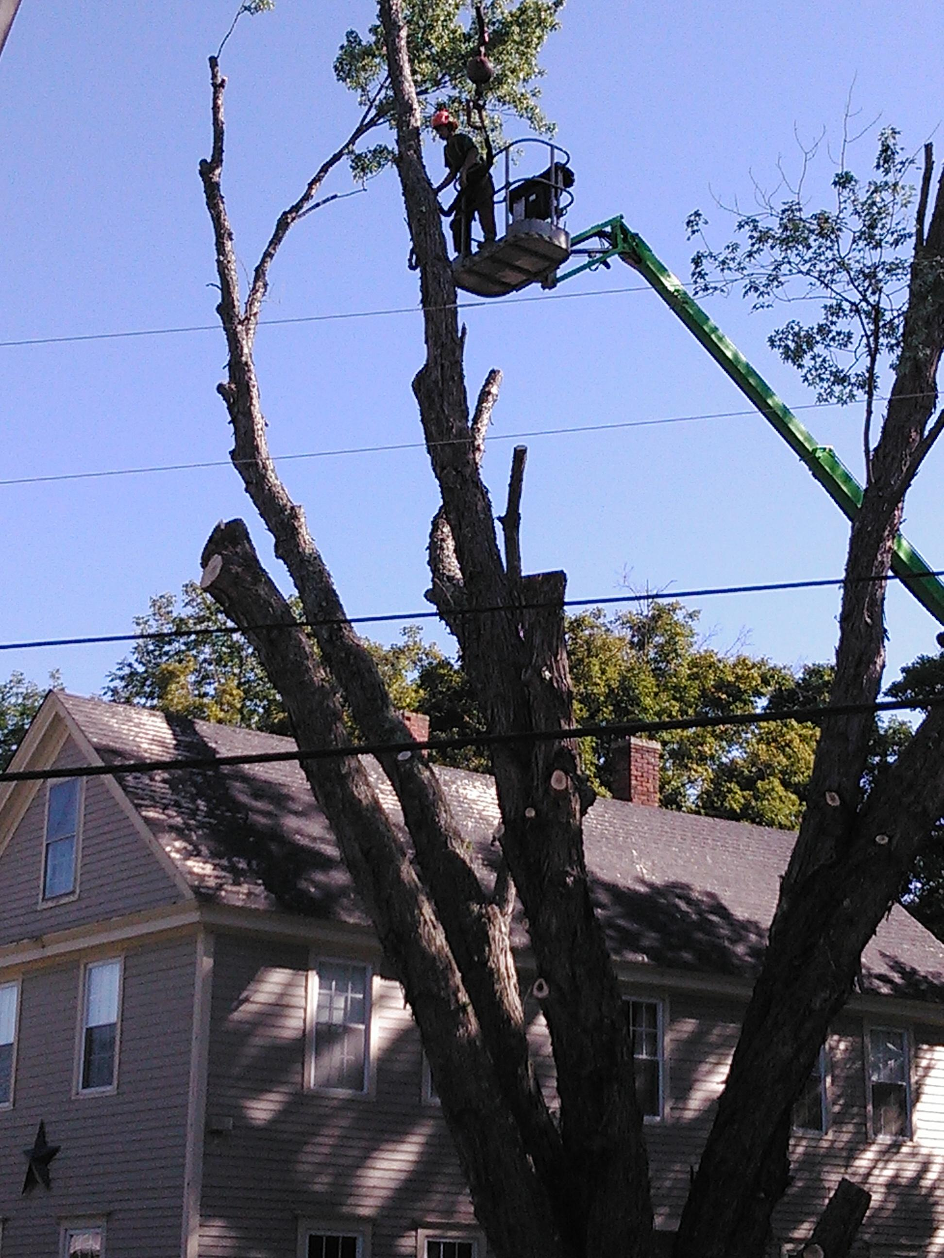 Gallagher Tree Service