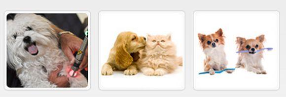 Eläinlääkärikeskus SoVet