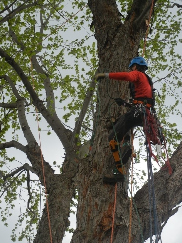 Canopée - Services d'arboriculture - Louis